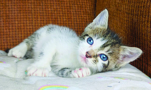 foster kitten care resources